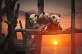 Big panda - 180320800