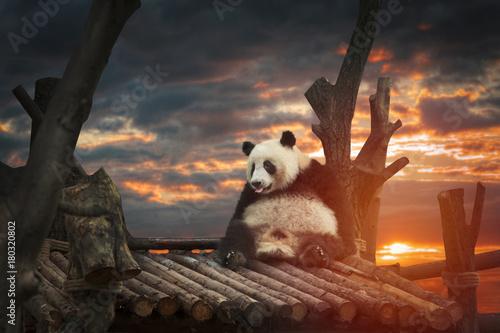Fotobehang Panda Big panda