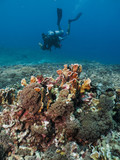 Coral reef with scuba diver