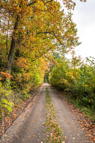 Fotobehang Honing Rural road through forest in autumn, scenic landscape of trees with yellow orange leaves