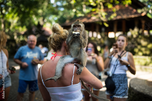 Plexiglas Bali Monkey Forest - Ubud - Bali