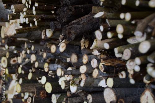 Papiers peints Texture de bois de chauffage cut wood and firewood