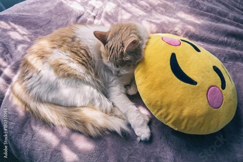 White and ginger / orange kitten sleeping on a yellow blushing emoji face pillow Poster