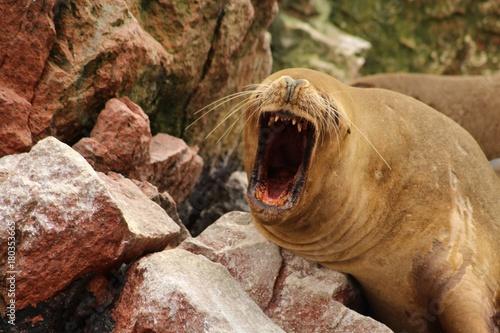 Fotobehang Schildpad animal