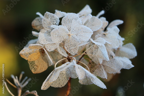 Aluminium Hydrangea Hortensienblüte mit Raureif