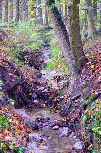 Fotobehang Purper Bachlauf im Wald