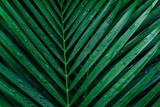 tropical palm foliage, greenery background - 180368400