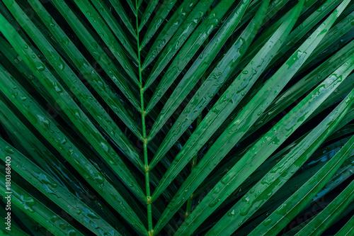 tropical palm foliage, greenery background