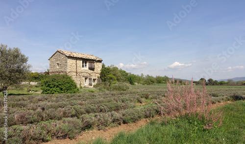 Tuinposter Lavendel en Provence