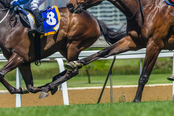 Horse Racing Action Hoofs Legs Heads