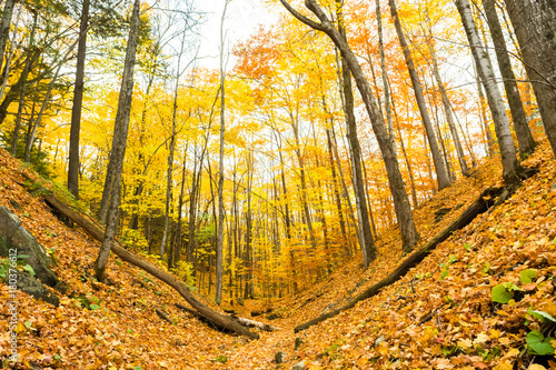 Aluminium Herfst Beautiful autumn scene in forest