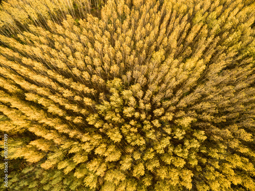 Aerial view of trees during autumn on sunny day in a forest.