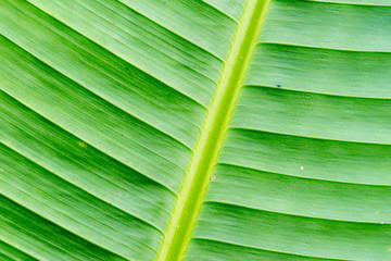texture of tropical plants, macrophotography