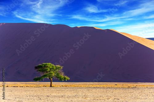 In de dag Aubergine Giant violet-orange dune