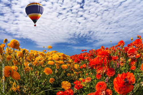 The huge multi-color balloon flies in clouds Poster