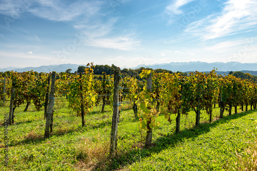 Staande foto Wijngaard vineyard of the Jurancon wine in the Pyrenees