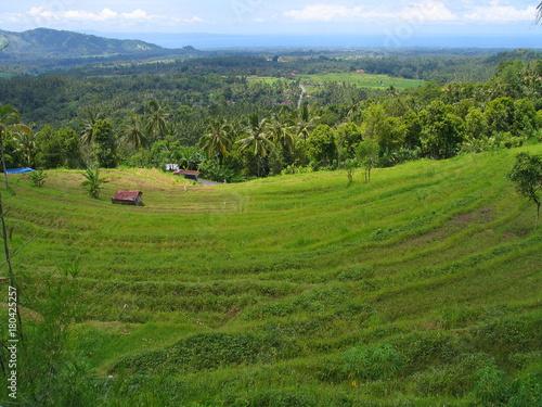Papiers peints Bali Bali. Arrozales verdes en la isla de Bali, Indonesia