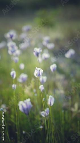 Aluminium Fiets vintage nature flowers.