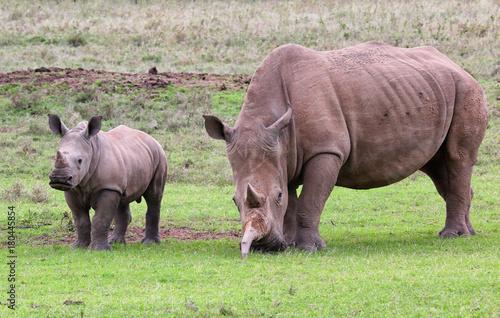 Fotobehang Neushoorn Nashornmutter mit Kind