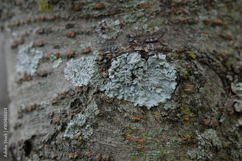 In de dag Stenen Tree bark with lichen