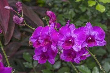 purple orchids bloom
