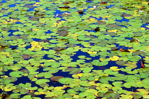 Lily Pad Background Wisconsin Poster