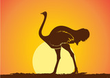 Ostrich Silhouette in Sunset Vector