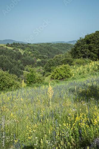 Foto op Plexiglas Pistache Summer view, Bulgaria