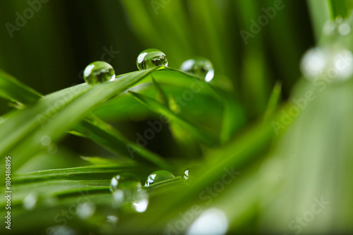 Foto op Canvas Gras water drops on the green grass