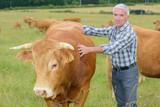 Farmer next to steer - 180511015