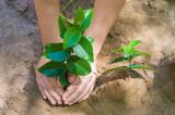 Ótimo conceito de sustentabilidade ambiental, mão de criança plantando muda de árvore - 180511679