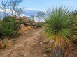 Arizona Desert Trail with Plants and Boulders