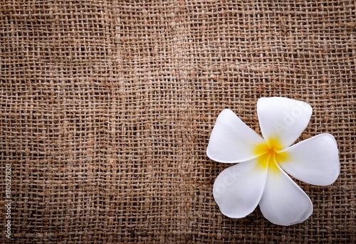 Fotobehang Plumeria Plumeria flower with sack background