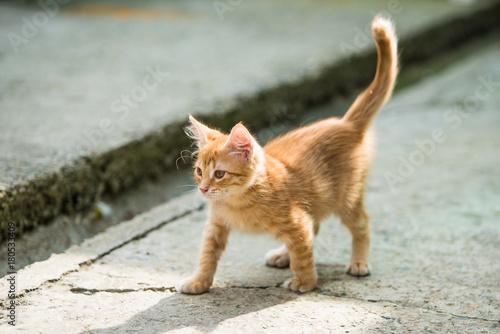 Fotobehang Kat Red little cat. funny kitten