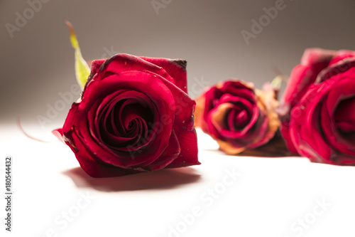 red roses, several roses,