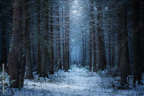 Foto op Canvas Weg in bos path in the beautiful spruce winter forest