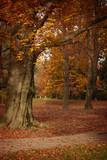 Beautiful trees in  autumn  park. Maribor, Slovenia - 180558685