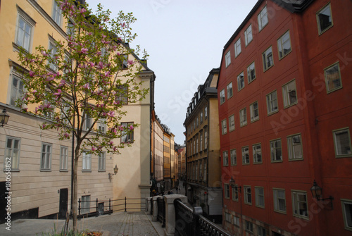 Tuinposter Stockholm Blossoming tree and view of Österlanggatan in Gamla Stan, Stockholm