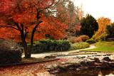 Beautiful trees in  autumn  park. Maribor, Slovenia - 180559098