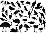 thirty five bird silhouettes on white