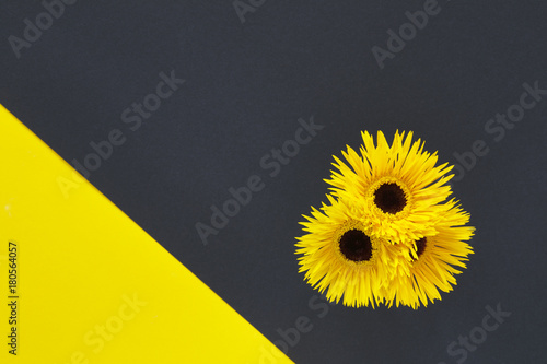 Fotobehang Gerbera Yellow and black abstract background with three yellow gerberas