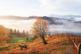 Shiny tree on a hill slope with sunny beams at mountain valley covered with fog. Gorgeous morning scene. Red and yellow autumn leaves. Carpathians, Ukraine, Europe. Discover the world of beauty - 180569248