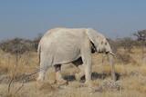 Elefant in der Savanne - 180572496
