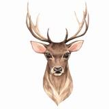 Noble deer. Watercolor illustration 1 - 180586688