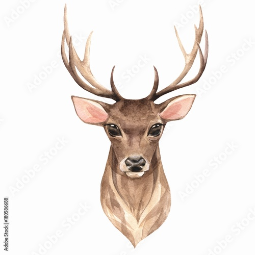 Noble deer. Watercolor illustration 1 - 180586688
