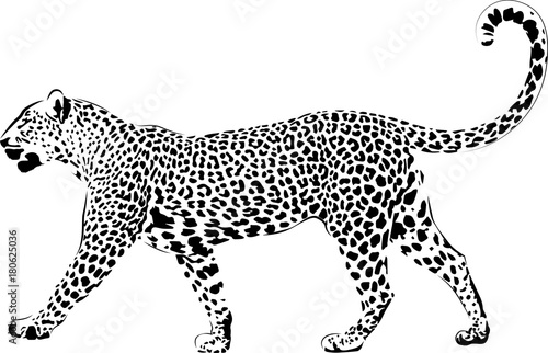 Fototapeta Leopard in black interpretation 2