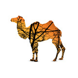 Silhouette of camel with branches of trees. Yellow and orange tones of sky.