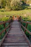 Drewniane schody w dół, Kadzielnia Kielce, Polska