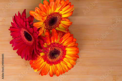 Fotobehang Gerbera Gerber. Beautiful flowers. Summer decoration. Nature.