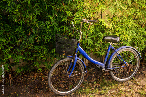 Fotobehang Fiets Blue Bicycle Bamboo
